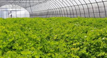 发展生态农业沈竑一生的追求
