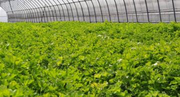 安徽原生态农业科技有限公司在香港股权市场挂牌上市