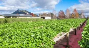 生态农业带给农民巨大收获