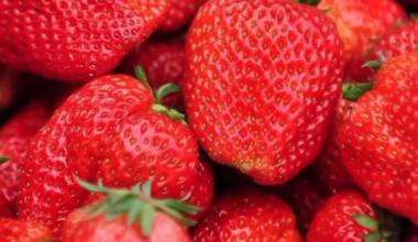 重庆水果市场最新行情